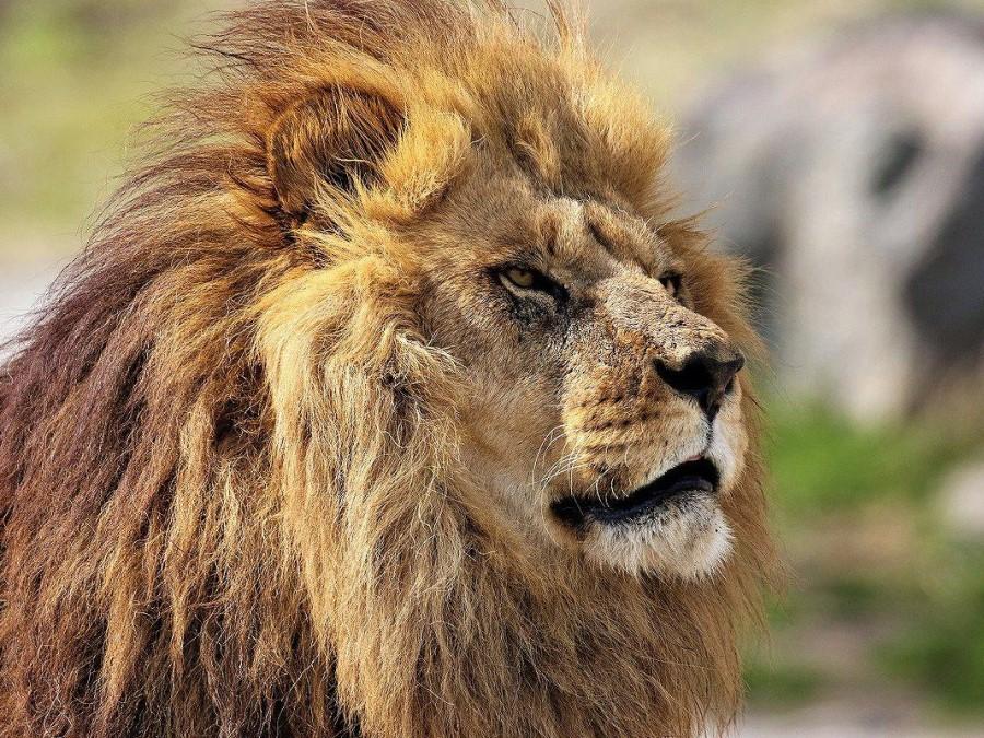 九州自然動物公園「アフリカンサファリ」|周辺観光|レンブラントホテル大分【公式】レンブラントグループホテル