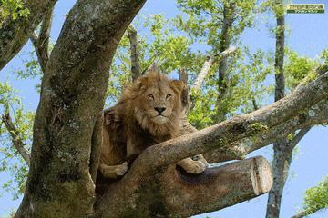 【アフリカンサファリプラン】<br>大自然でのびのび暮らす動物にワクワク♪<br>バイキング朝食付
