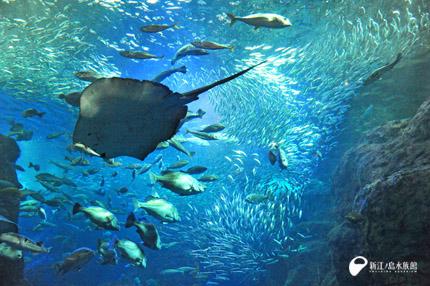 『新江の島水族館』の入場券付き宿泊プラン