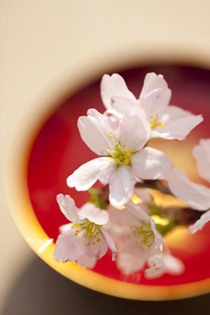 【お顔合わせプラン】日本料理富貴野・鉄板焼山茶花 スタイルで選べる